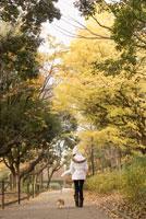 秋の公園を散歩する女性と犬 28204000113| 写真素材・ストックフォト・画像・イラスト素材|アマナイメージズ