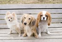 ベンチに座る犬 28204000119| 写真素材・ストックフォト・画像・イラスト素材|アマナイメージズ