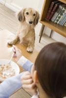食事中の女性をのぞきこむ犬 28204000131| 写真素材・ストックフォト・画像・イラスト素材|アマナイメージズ