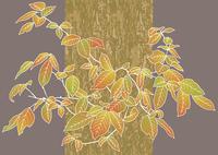 紅葉 60007000726| 写真素材・ストックフォト・画像・イラスト素材|アマナイメージズ
