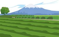 静岡の富士山と茶畑 60009000283| 写真素材・ストックフォト・画像・イラスト素材|アマナイメージズ