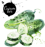 Green cucumber. Hand drawn watercolor painting on white background. Vector illustration 60016001447| 写真素材・ストックフォト・画像・イラスト素材|アマナイメージズ