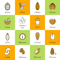 Set of acorn chestnut hazelnut coconut sunflower seeds and nuts in flat line style vector illustration 60016002952| 写真素材・ストックフォト・画像・イラスト素材|アマナイメージズ