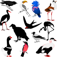 Collection of vector images of birds 60016009674| 写真素材・ストックフォト・画像・イラスト素材|アマナイメージズ