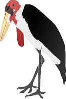 Vector illustration of a marabou