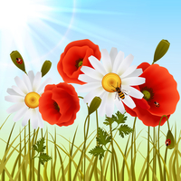 Red romantic poppy flowers white daisies and grass with ladybugs wallpaper vector illustration 60016028704| 写真素材・ストックフォト・画像・イラスト素材|アマナイメージズ