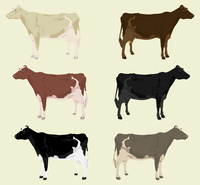 Cow3. Some cows on a farm of different colouring. A vector illustration 60016029663| 写真素材・ストックフォト・画像・イラスト素材|アマナイメージズ