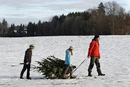 Family taking christmas tree on sledge