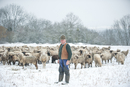 Germany, Rhineland-Palatinate, Neuwied, shepherd and his flock of sheep standing on snow covered pasture