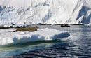 Weddell seal (Leptonychotes weddellii) and tourists in Zodiac boat, Antarctica, Polar Regions