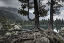 pine tree roots with mountain lake in the background