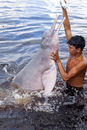 South America, Brazil, Amazonas, A boy feeding an Amazon river dolphin fish on a creek in the Rio Negro in the Anavilhanas islan