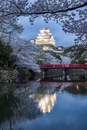 Himeji castle during cherry blossom season, Hyogo Prefecture, Japan