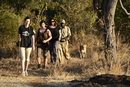 Africa, Zimbabwe, Victoria Falls, Walk with  Lions, tourists walking with lion,