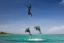 Trainer being thrown up in the air by dolphins, Honduras