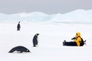 Emperor penguins and tourist observing each other, October,