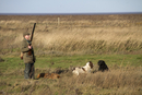 Man with12 bore shotgun and working gun dogs, at pheasant sh