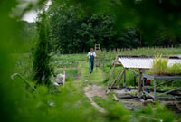 Farmer between vegetable patches,biological dynamic farmin 01510101684| 写真素材・ストックフォト・画像・イラスト素材|アマナイメージズ