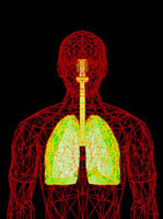 Computer graphic of wire-frame figure with lungs 01809022514| 写真素材・ストックフォト・画像・イラスト素材|アマナイメージズ
