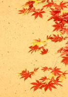 紅葉の和風イメージ 02022348205| 写真素材・ストックフォト・画像・イラスト素材|アマナイメージズ
