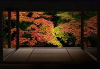 建物内から見た紅葉 02022349010| 写真素材・ストックフォト・画像・イラスト素材|アマナイメージズ