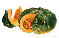 水彩画 カットされた大きな会津かぼちゃ 02237010406| 写真素材・ストックフォト・画像・イラスト素材|アマナイメージズ