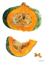 水彩画 カットされたかぼちゃ 02237010409| 写真素材・ストックフォト・画像・イラスト素材|アマナイメージズ