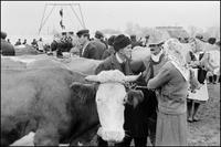 YUGOSLAVIA. Paracin. 1958. Peasant market. In the background, acrobats from a traveling country circus perform. 02265047307| 写真素材・ストックフォト・画像・イラスト素材|アマナイメージズ