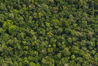 Tropical forest (aerial), Iguacu National Park, Brazil 02314006468| 写真素材・ストックフォト・画像・イラスト素材|アマナイメージズ