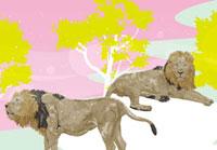二頭のライオン 02425000031| 写真素材・ストックフォト・画像・イラスト素材|アマナイメージズ