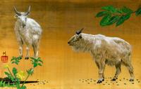 2頭のゴールデンターキン 02425000042| 写真素材・ストックフォト・画像・イラスト素材|アマナイメージズ