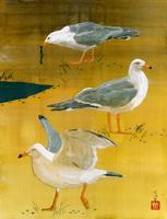 3羽のカモメ 02425000043| 写真素材・ストックフォト・画像・イラスト素材|アマナイメージズ