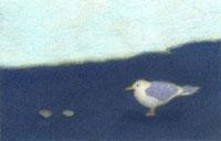 海辺に佇むカモメと貝殻 02456000012  写真素材・ストックフォト・画像・イラスト素材 アマナイメージズ