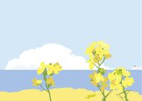 海と菜の花 02526000259  写真素材・ストックフォト・画像・イラスト素材 アマナイメージズ