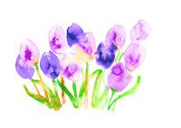 tulip 02620000021| 写真素材・ストックフォト・画像・イラスト素材|アマナイメージズ