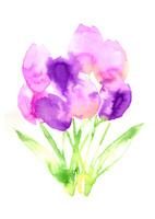 tulip 02620000022| 写真素材・ストックフォト・画像・イラスト素材|アマナイメージズ