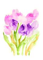 tulip 02620000023| 写真素材・ストックフォト・画像・イラスト素材|アマナイメージズ