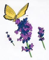 花と蝶 02665000065  写真素材・ストックフォト・画像・イラスト素材 アマナイメージズ
