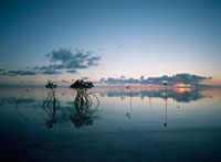 Looking out to sea past mangrove shoots at sunset 20023004140| 写真素材・ストックフォト・画像・イラスト素材|アマナイメージズ