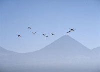 Flamingos flying over the Andes 20023004184| 写真素材・ストックフォト・画像・イラスト素材|アマナイメージズ