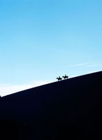 Silhouetted horse riders at dusk on a sand dune in the Valle 20023004190| 写真素材・ストックフォト・画像・イラスト素材|アマナイメージズ