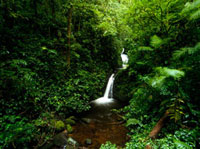 Waterfall in Monteverde Cloud Forest Reserve 20023004195| 写真素材・ストックフォト・画像・イラスト素材|アマナイメージズ