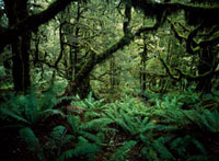 Looking through thick forest beside the Routeburn Track 20023004557| 写真素材・ストックフォト・画像・イラスト素材|アマナイメージズ