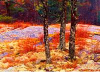 Trees in Autumn Sandilands Provincial Forest Manitoba 20025010630| 写真素材・ストックフォト・画像・イラスト素材|アマナイメージズ