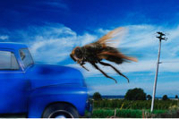 Fly Flying in Path of Truck