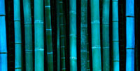 Close-up of Bamboo Forest at Dusk, Near Kyoto, Japan 20025297277| 写真素材・ストックフォト・画像・イラスト素材|アマナイメージズ