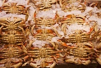 Freshly Cooked, Dungeness Crabs on Ice,Pike Place Market, Se 20025300094| 写真素材・ストックフォト・画像・イラスト素材|アマナイメージズ