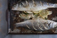 Still Life of Baked Trout with Lemon and Fennel 20025301441| 写真素材・ストックフォト・画像・イラスト素材|アマナイメージズ