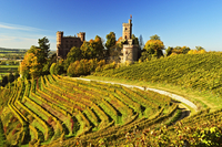 Ortenberg Castle and Vineyards in Autumn, near Offenburg, Ortenau District, Baden-Wurttemberg, Germany 20025312908| 写真素材・ストックフォト・画像・イラスト素材|アマナイメージズ