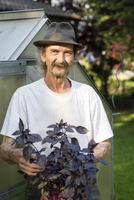 Portrait of senior man with hat and moustache standing in front of a greenhouse holding red basil, Ocimum basilicum rubin 20025330854| 写真素材・ストックフォト・画像・イラスト素材|アマナイメージズ